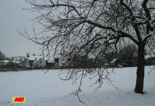 Blumweiler im Winter